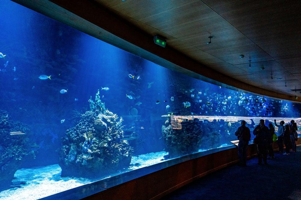 Aquarium at Oceanografic Valencia