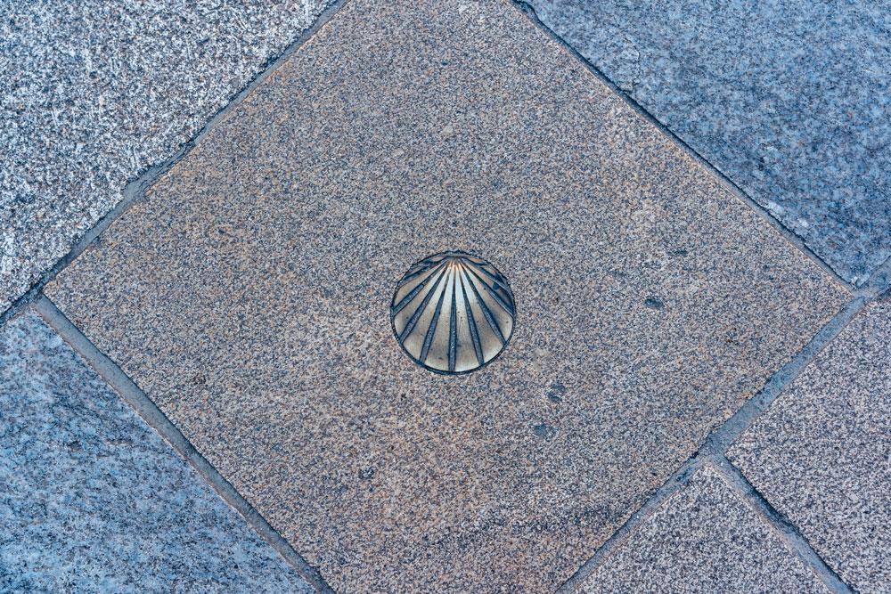Scallop shell on the sidewalk